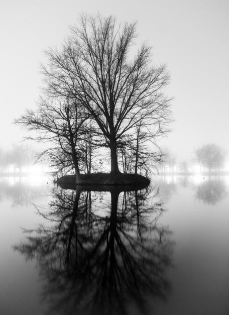 tree reflection on lake black and white fog night nighttime photography lights